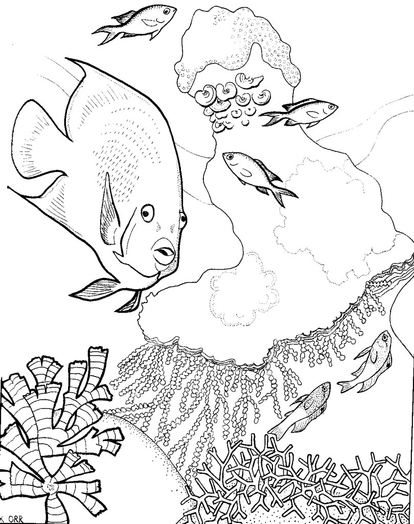 Coral Reefs Coloring Pages To Print Large Coloring Pages Reef Coloring Pages