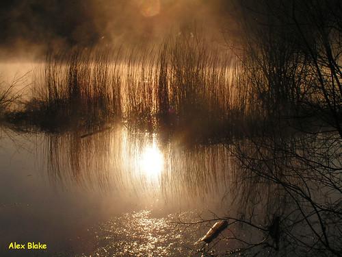 lake reflection reed silhouette swansea sunrise pond thepluck