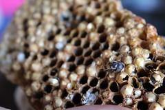 Balinese honeycomb