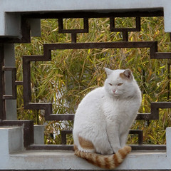 "Small Wild Goose Pagoda ""Temple Cat"", Xi'an"