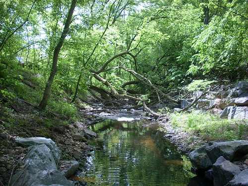 Photo set of Turkey Branch Stream Restoration and Stormwater Pond Retrofit