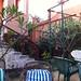 Small photo of Backyard garden at Rasha's