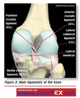 Anatomy of a knee