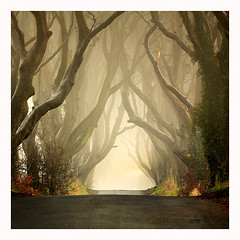 The Dark Hedges .II  (2011)