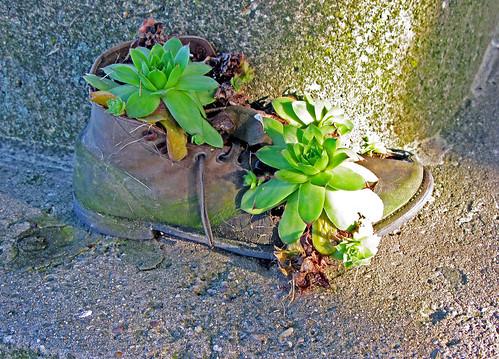 Karol's Boot Planter