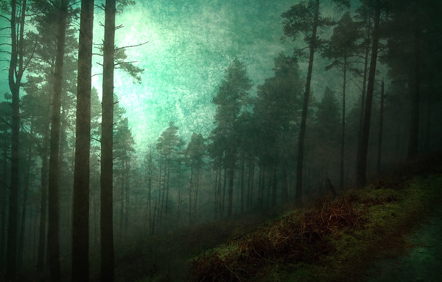 Emerald Forest (Texture) better on black | Flickr - Photo Sharing!: www.flickr.com/photos/barragebox/5398643453