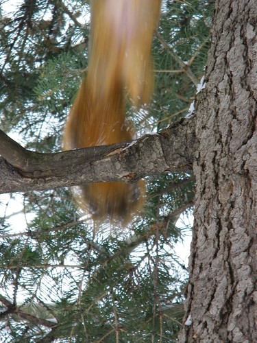 231/365/961 (January 28, 2011) – Squirrels at the University of Michigan in Winter