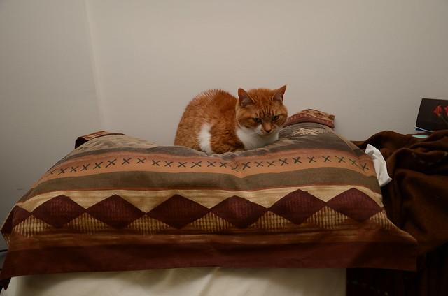Cat Eye Pillow Weighted World Market