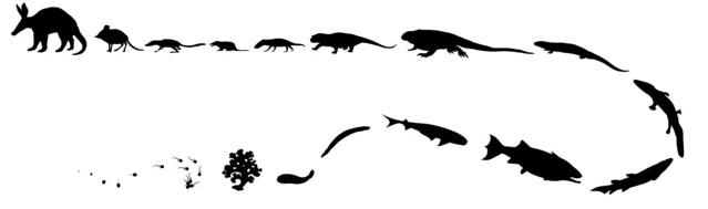 Evolution of the Aardvark from Flickr via Wylio