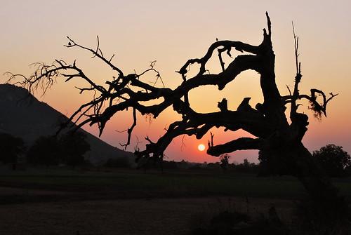 "trees sunset india nature twilight asia travelphotography lowlightphotography availablelightphotography saarc indianimages silhouettephotography ""nikonflickraward"" madhyapradeshindia platinumpeaceaward"