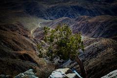 Joshua Tree national park-3-2.jpg