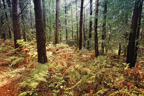 Bäume Wildpark Schwarze Berge Hamburg