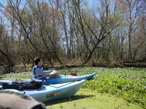 southcarolina kayaking paddling savannahriver lowcountryunfiltered textfix