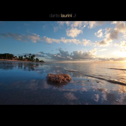 ocean trip travel sunset brazil sky brasil clouds sunrise gold mar do atlantic dourado nuvens lowtide ceu por oceano nordeste maragogi alagoas silhueta sigma1020 homam nikond90 dantelaurinijr