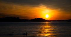 AuringonlaskunJoutsenet