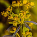 Sparkling flower by mvukovic56