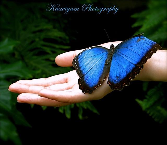 [Explore - FP] O! Butterfly! Butterfly! ஏன் விரித்தாய் சிறகை...எனையும்தான் உன்னைப் போலே...படைத்தானே இறைவன் எனும் ஓர் தலைவன்...