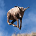 Jump For Joy ... It's Spring by wyojones