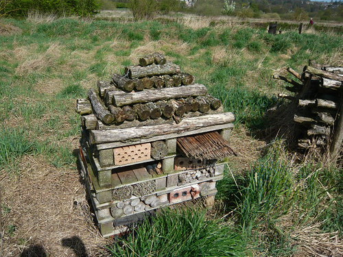Insect home