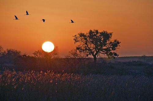 winter light sun lake tree luz sol sunrise arbol silhouettes cranes amanecer invierno laguna siluetas ciudadreal lamancha castillalamancha lastablas daimiel grullas lastablasdedaimiel carrizos tablasdedaimiel parquenacionaldelastablasdedaimiel reedgrasses marcoantoniolosas