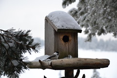 perching bird(0.0), lighting(0.0), winter(1.0), wood(1.0), snow(1.0), birdhouse(1.0), bird feeder(1.0), bird(1.0),