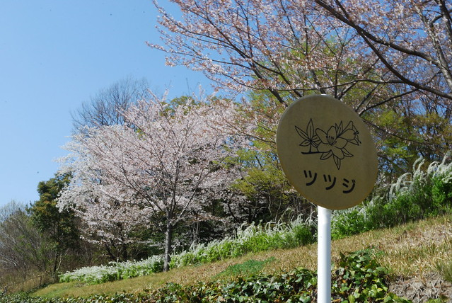 Cherry viewing sign in Heiwa Koen in Nagoya-shi, Japan. Photo by Keight Beaven. All rights reserved.