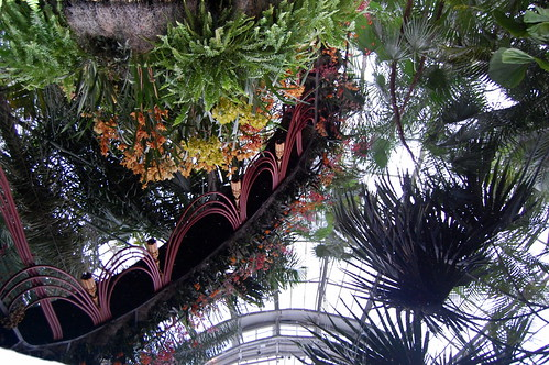 Orchid Show Reflection