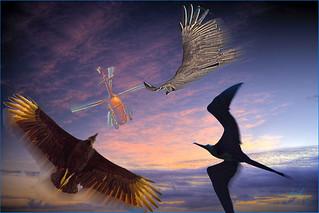 0130 Bird Attack