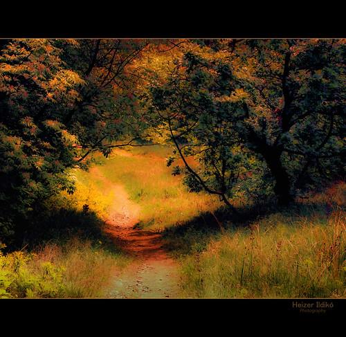 tree forest landscape spring hungary natural természet fa tavasz táj tájkép erdő canonsx10