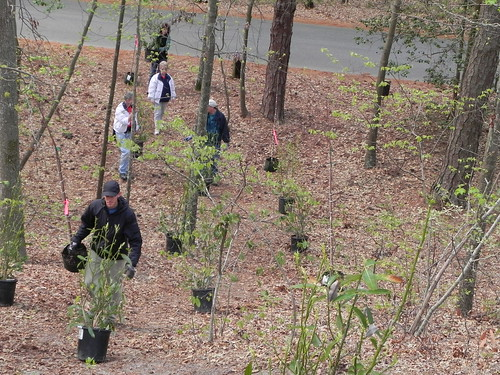 First Landing State Park's Tree Army will plant trees to discourage unofficial trails that damage the park's resources