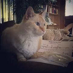 My little buddy. #KingLeoLongtail #puddytat #kitty #catstagram #catsofinstagram #feline #survivor #FIV #pumpkinpoint #flamepointsiamese