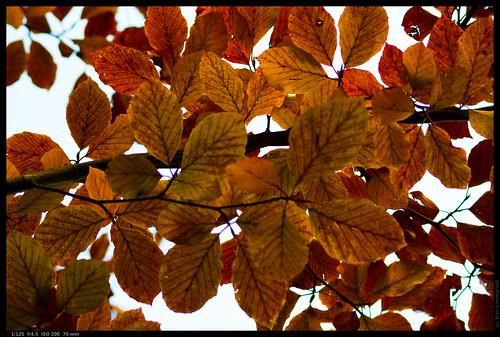 Herbstlaub 5