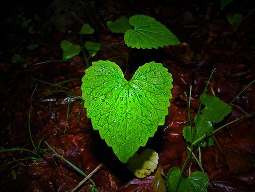 41° anniversario Giornata mondiale della Terra - Earth Day e 2011 Anno Mondiale delle Foreste - International Year of Forests 2011 - Année internationale des forêts 2011