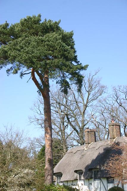 Thatch and cedar