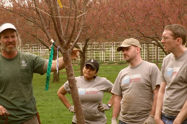 Chris Roddick explains to the group how BBG's Prunus 'Kanzan' cherry trees are grown. Photo by Kathryn Littlefield.