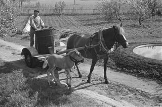 Paard en wagen: paard met veulen / Horse carriage: horse and foal