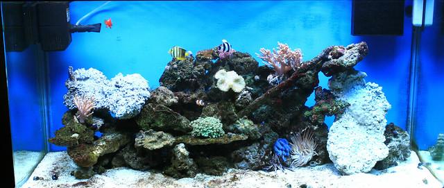 DIY Reef live rock Flickr - Photo Sharing!