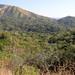 Tapanatapec_Foothills_Oaxaca_Mexico_2004_12_21_052.jpg por maholyoak