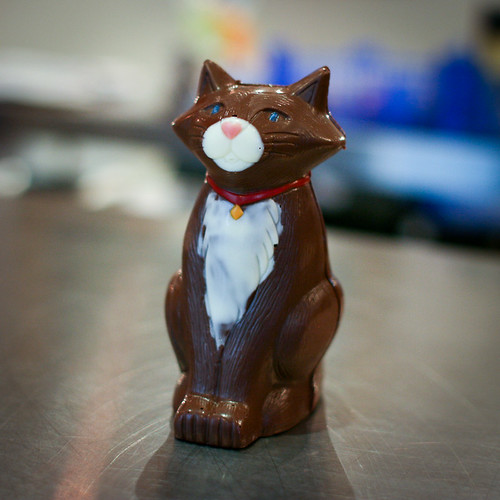 Chocolate cat!