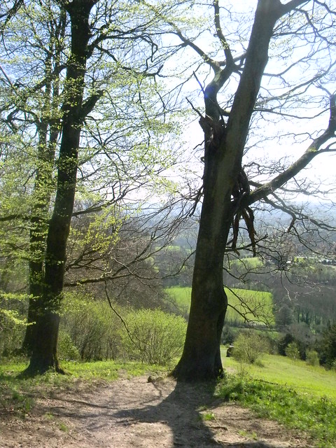 View from Shoulder of Mutton Hill