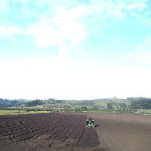 Plowing the field in Half Moon Bay.