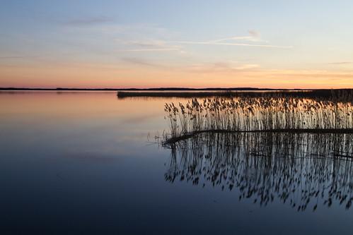 sunset reed sweden sverige götakanal östergötland boren vass borensberg canonefs1785mmf456isusm canoneos7d