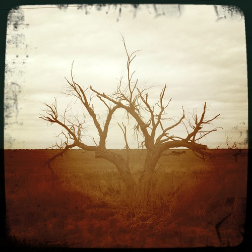 ranch west tree weather silhouette rural landscape dead photography texas cloudy farm branches