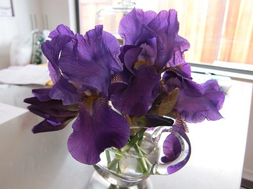 iris, purple, bearded IMG_5459
