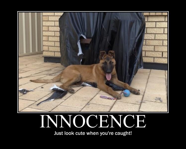 Motivational Poster: Innocence
