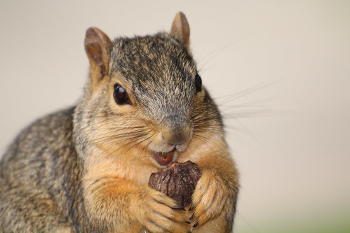 I haz a nut