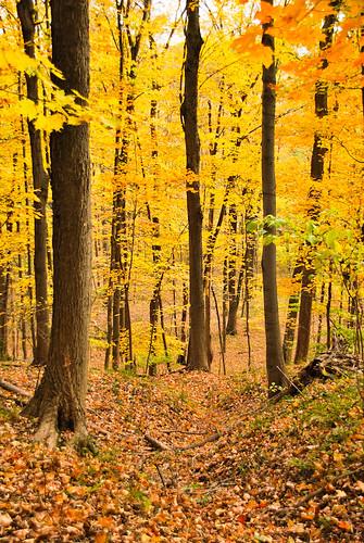 park autumn trees usa fall nature colors leaves forest woods state pennsylvania path foliage pa trail newtown bucks buckscounty 2010 northhampton tylerpark dcnr oktober2010