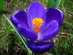 Spring flowers, Voorjaarsbloemen 4, In Explore op 25-03-2011 # 2, Front Page #2