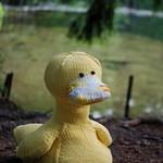 Domenic Duck