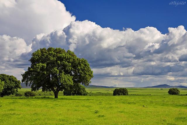 Extremaduran pastureland